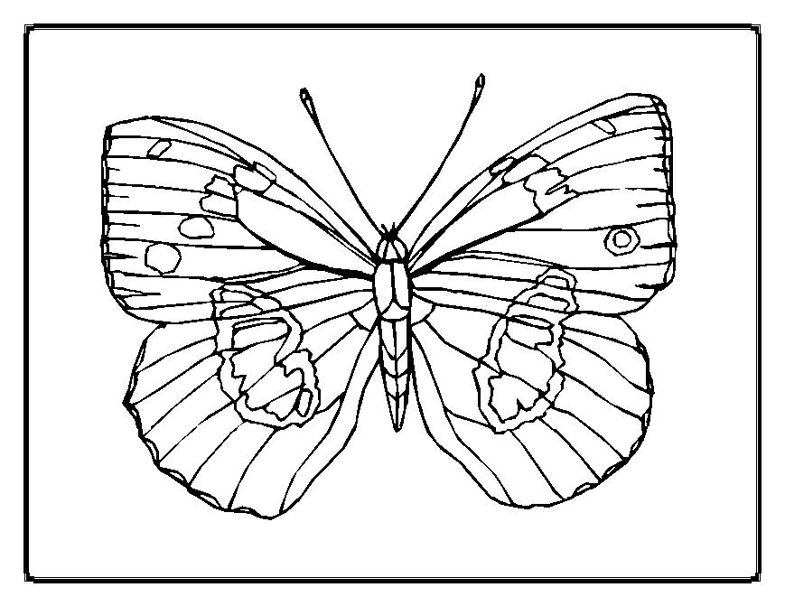 coloring pages painted lady butterfly - photo#11