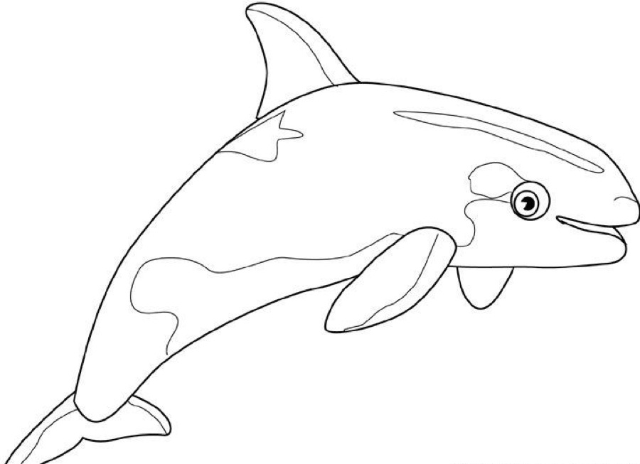 Cartoon Humpback Whale AZ Coloring