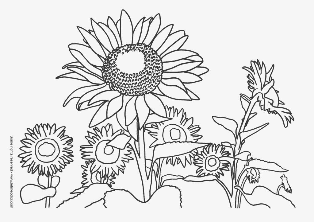 van gogh sunflowers coloring pages sunflower coloring pages
