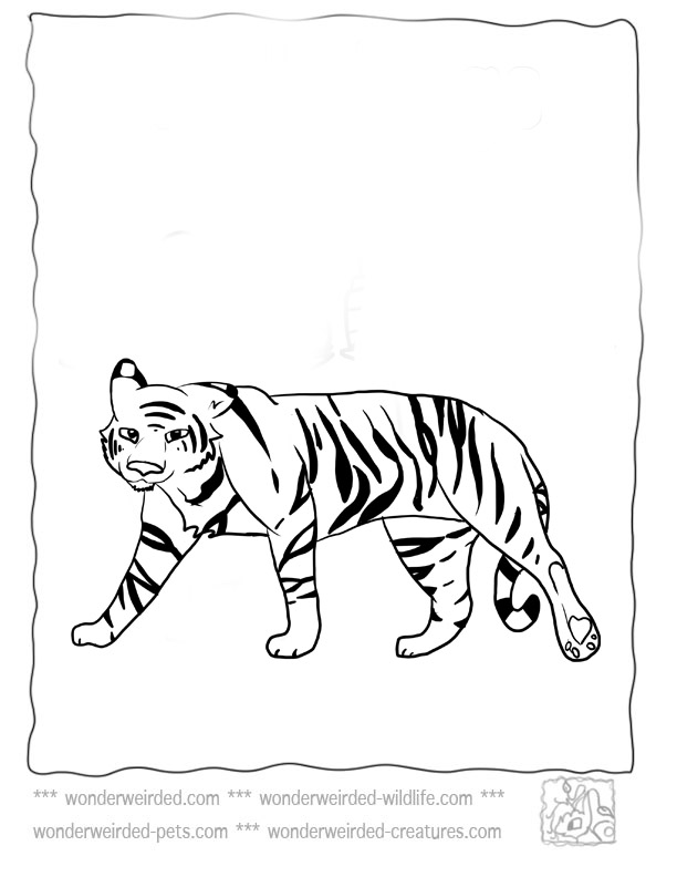 color coded coloring pages - web page background color codes az coloring pages