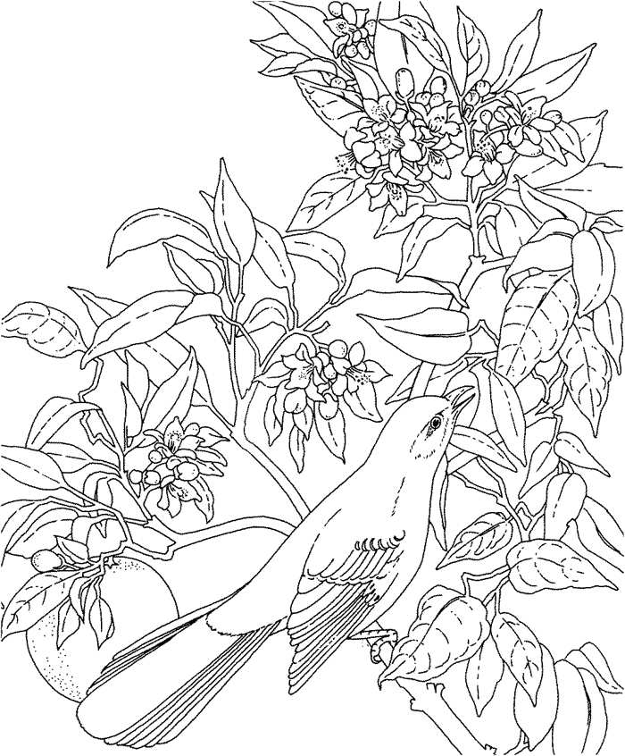 kids hawaii flowers coloring pages - photo#17