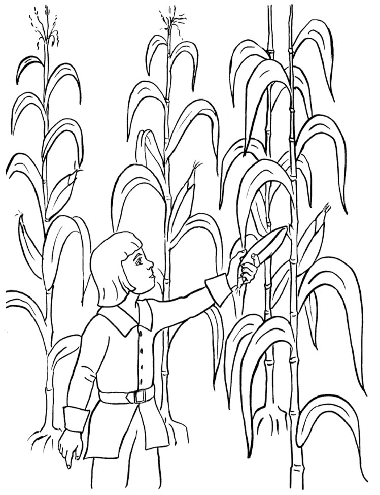 Harvest Corn Coloring Page Harvesting The Corn Field