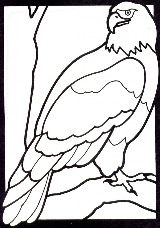 bald eagle coloring page az coloring pages