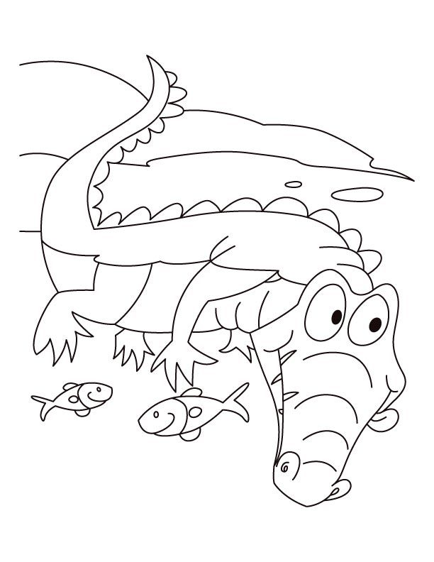 alligator coloring pages for kids - photo#27
