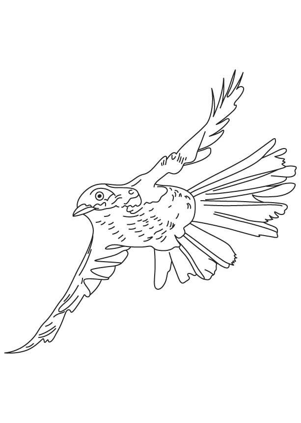 Bird Brown Thrasher Coloring Page