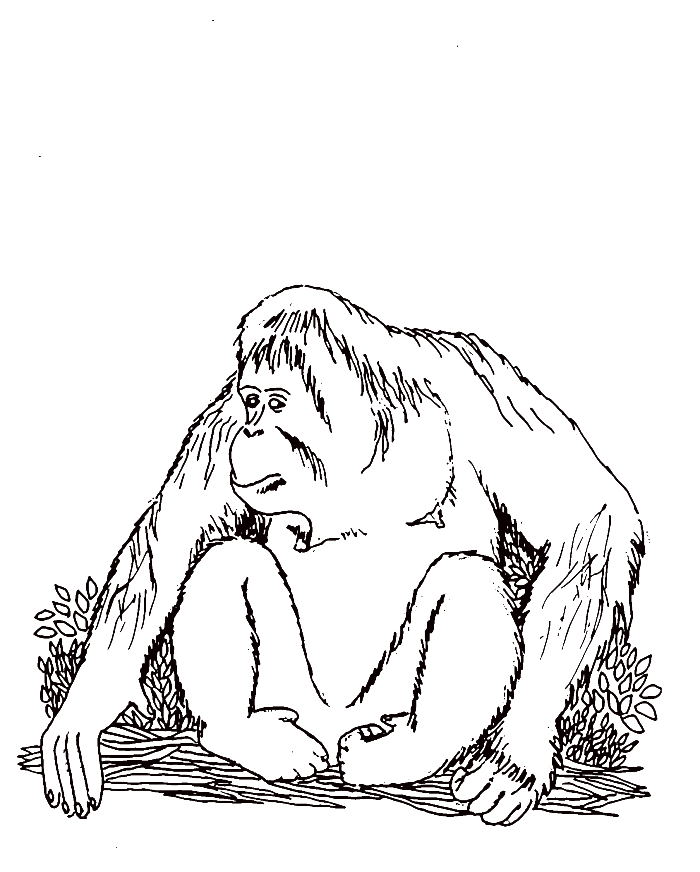 Orangutan Coloring Pages Coloring Home Orangutan Coloring Pages