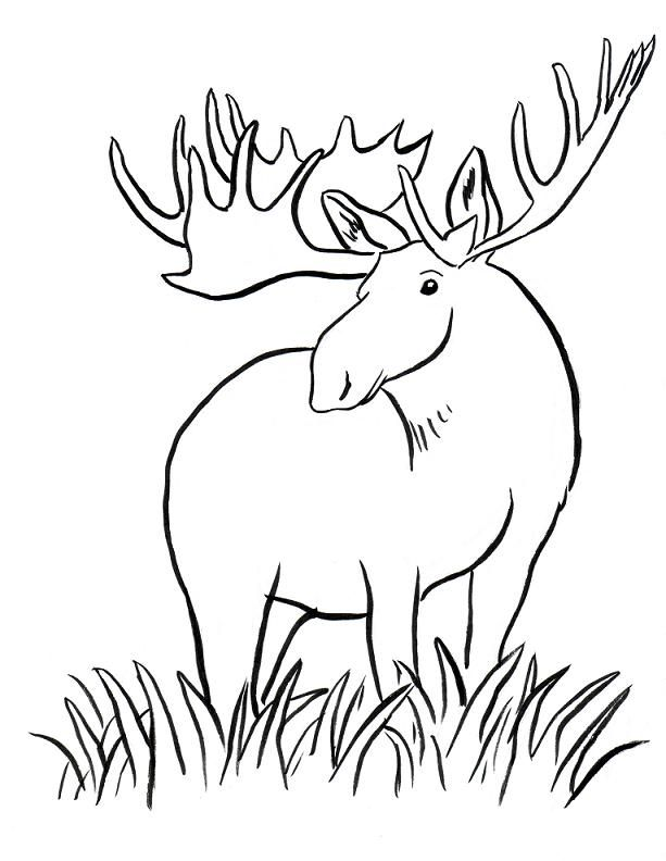 moose coloring page - moose drawings coloring home