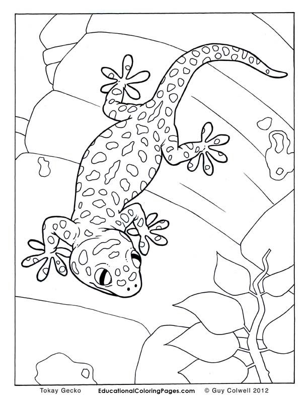 Crested Gecko Coloring Page Crested Gecko Coloring Page