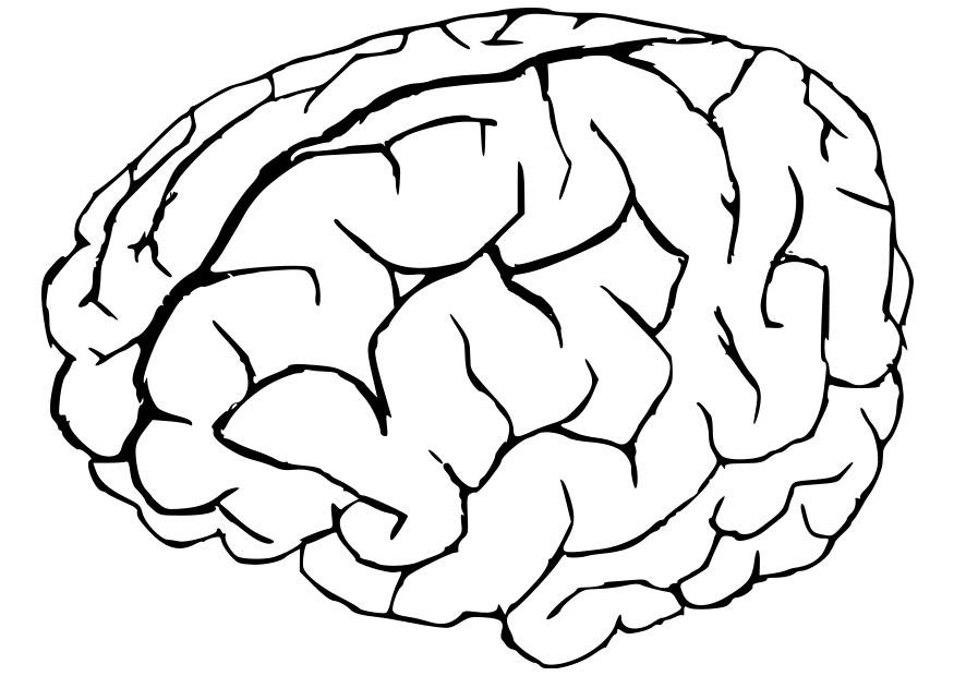 27+ Printable Brain Coloring Pages