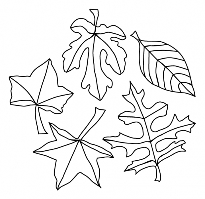 Autumn Leaves Coloring Pages Az Coloring Pages Fall Leaves Coloring Pages