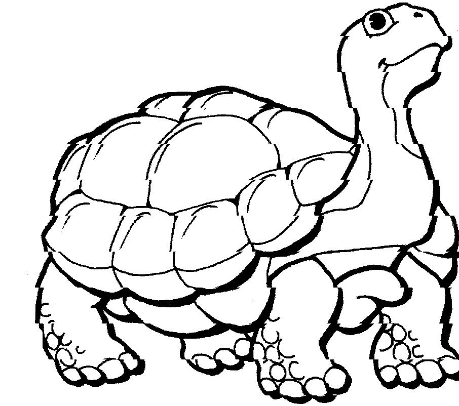 Sea Turtle Coloring Pages Free - AZ Coloring Pages