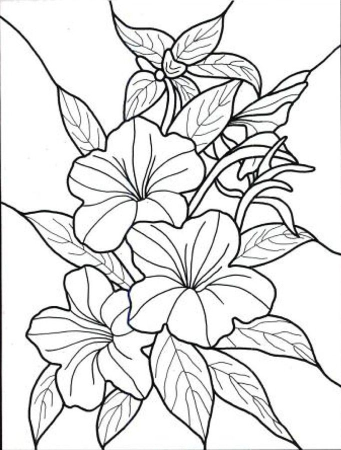 tropical flowers stained glass coloring book - Tropical Coloring Pages Print