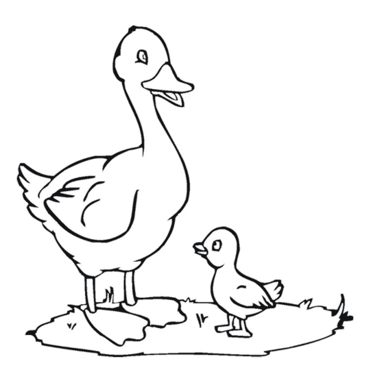 zack and quack coloring pages - photo#1