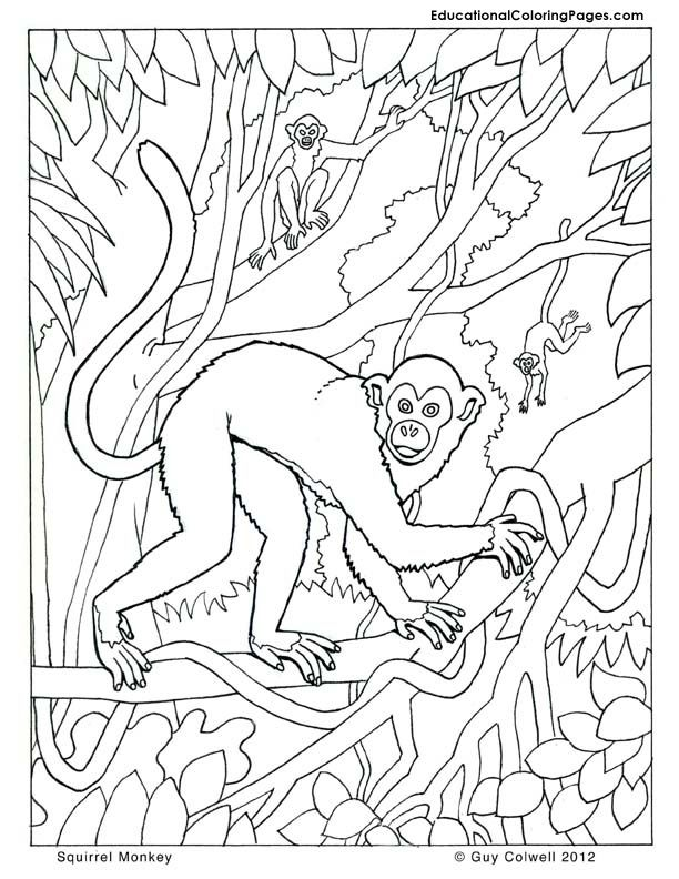 monkey coloring pages animal coloring pages for kids