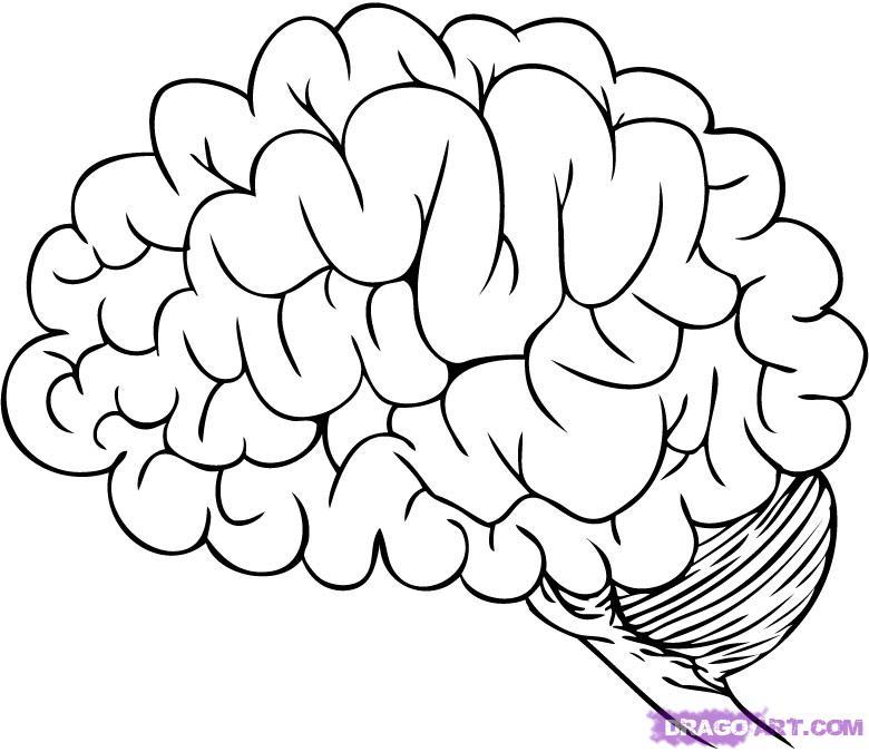 Human Brain Coloring Pages Az Coloring Pages Brain Coloring Pages