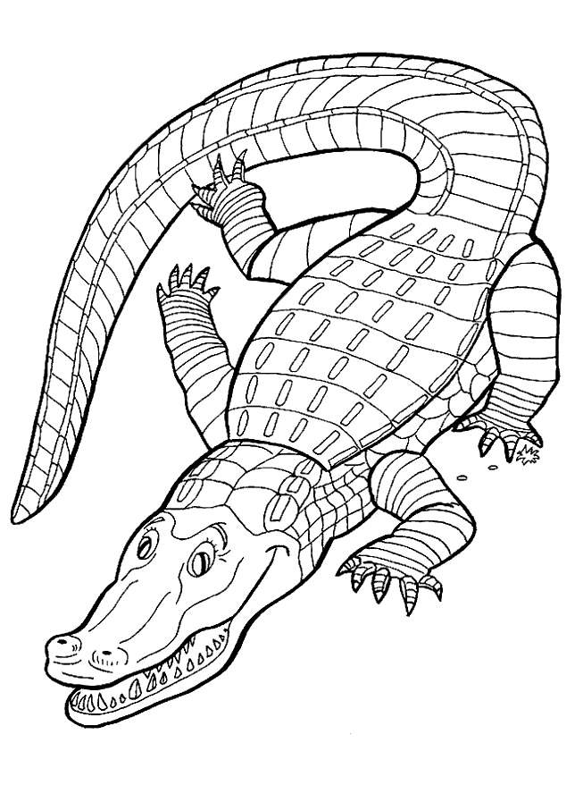 coloring pages for reptiles alligators - photo#2