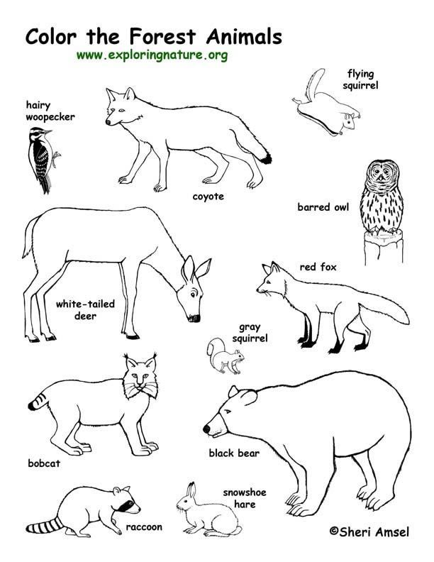 woodland animals coloring pages