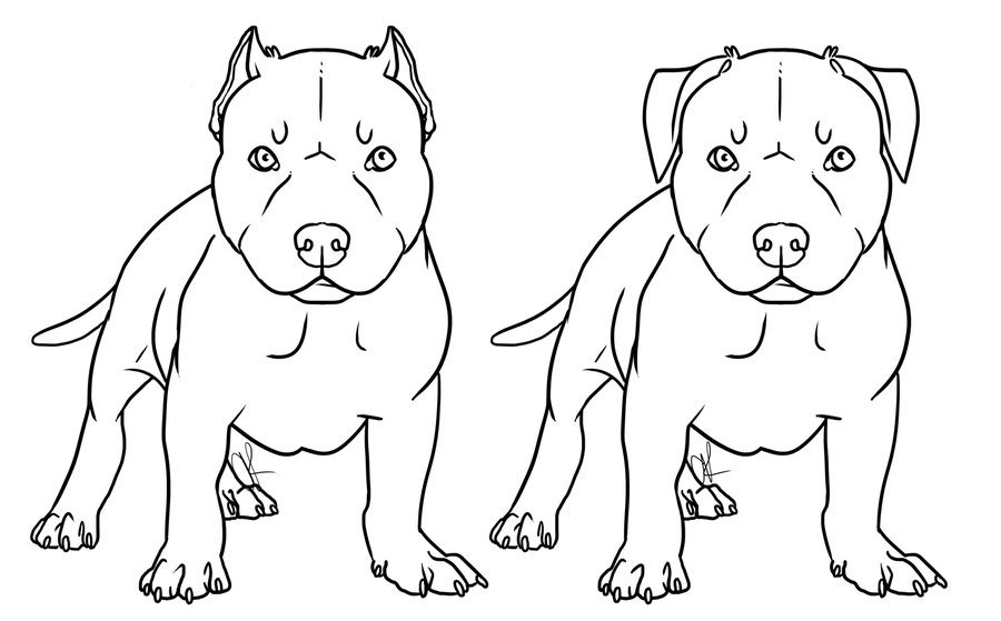 pit bulls coloring pages - photo#1