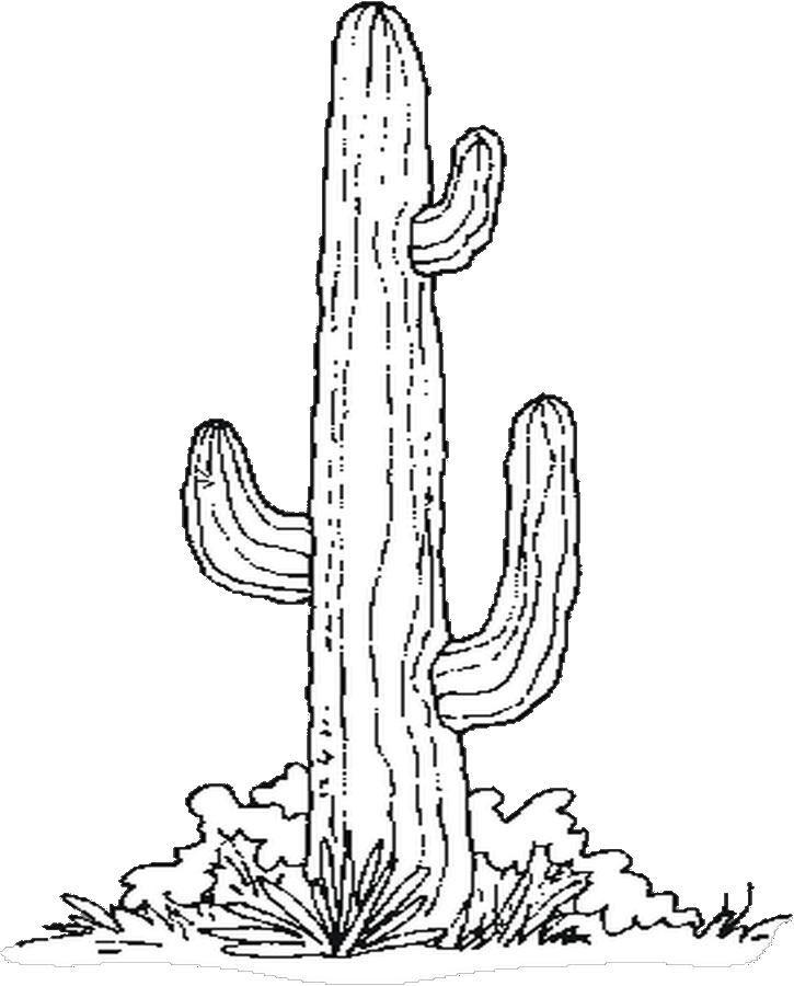 photo relating to Free Printable Cactus Coloring Pages named Cactus Coloring Sheet - Coloring Dwelling