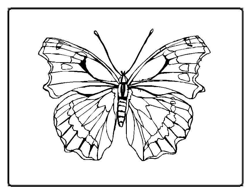 Butterfly designs to color - photo#11