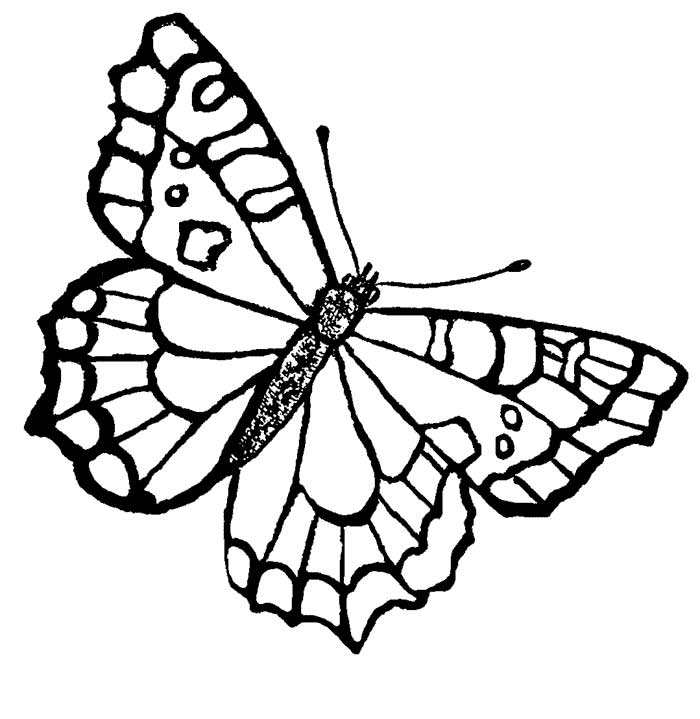 coloring pages painted lady butterfly - photo#21