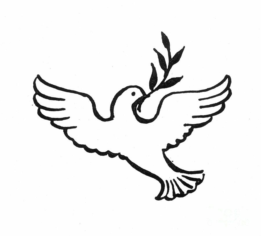 Peace Dove Image
