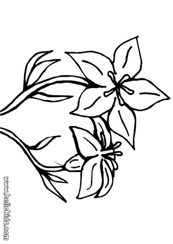 Hd lily flower coloring pages printable coloring pages for Lily flower coloring pages