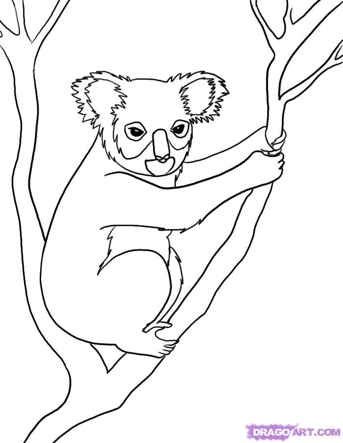 How to Draw a Koala, Step by Step, Rainforest animals, Animals