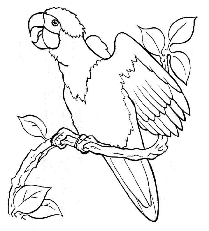 Free Printable Parrot Coloring Pages For Kids Az