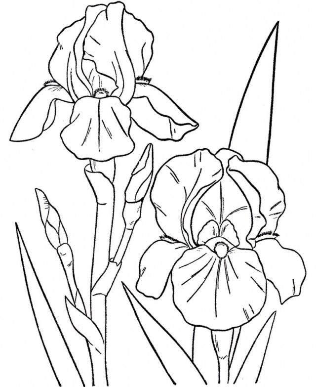 Iris Flower Coloring Page : Tropical Flower Coloring Pages Coloring Home