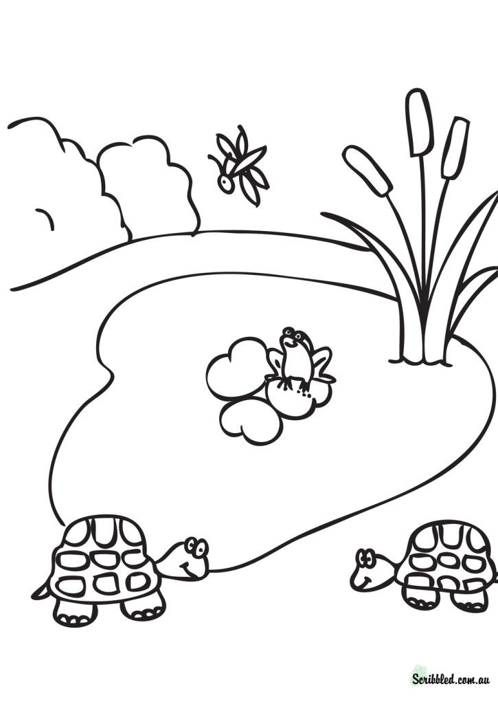 pond habitat coloring pages - photo#20