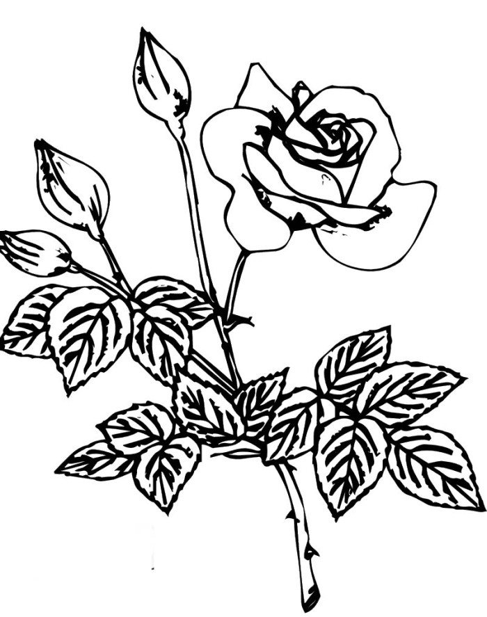 Printable Colts Coloring Pages Az Coloring Pages Printable Colts Coloring Pages