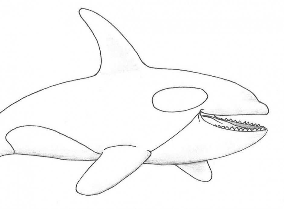 whale coloring book pages - photo#19