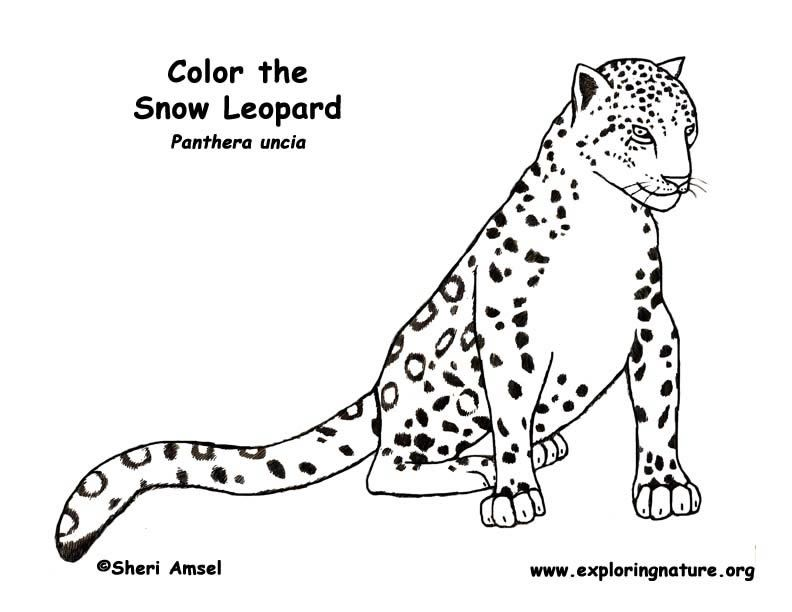 Snow Leopard Coloring Page -- Exploring Nature Educational ...