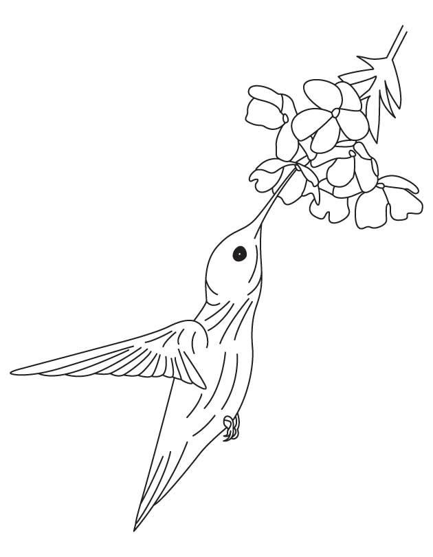Hummingbird and flower coloring pages | Download Free Hummingbird