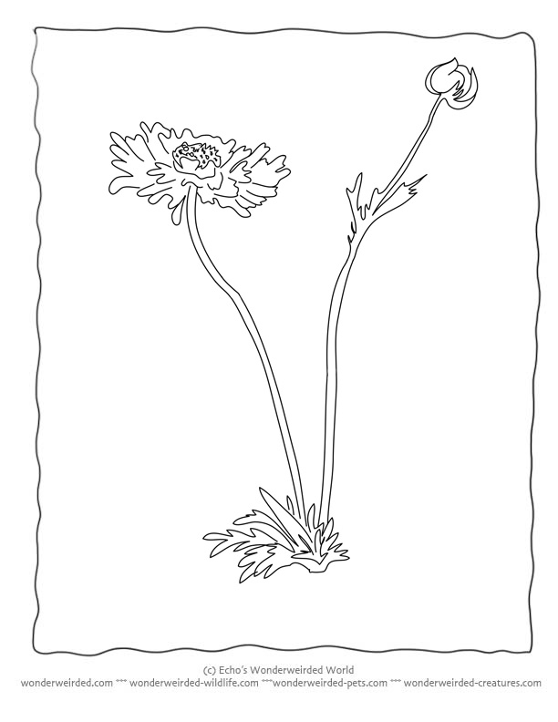 botany coloring pages - photo#3
