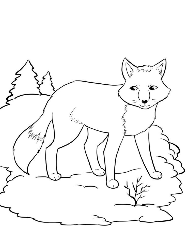 Arctic Fox Coloring Pages - Coloring Home