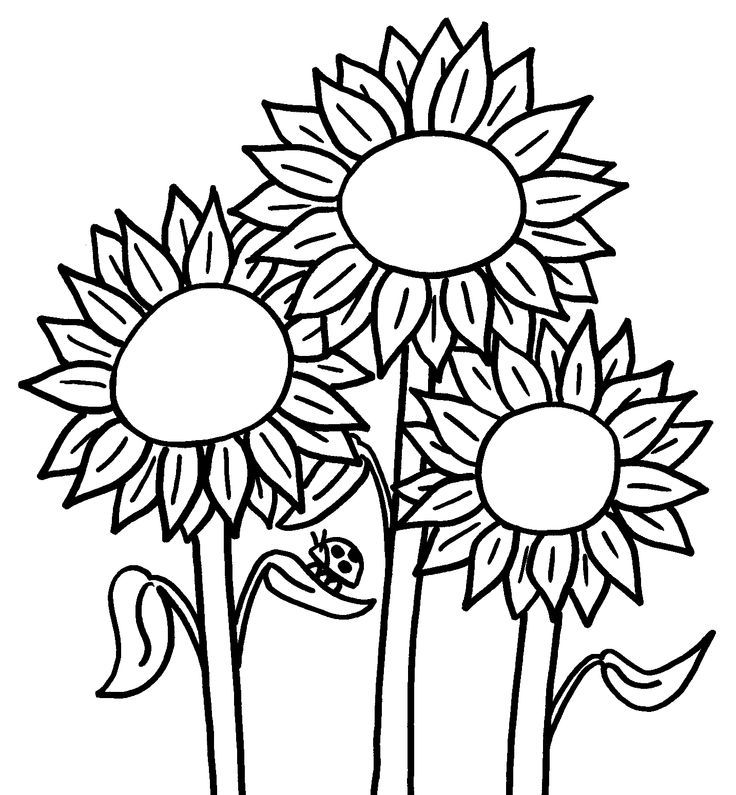 Printable Sunflower Coloring Home