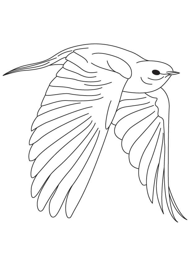 Fearless Bluebird Coloring Page