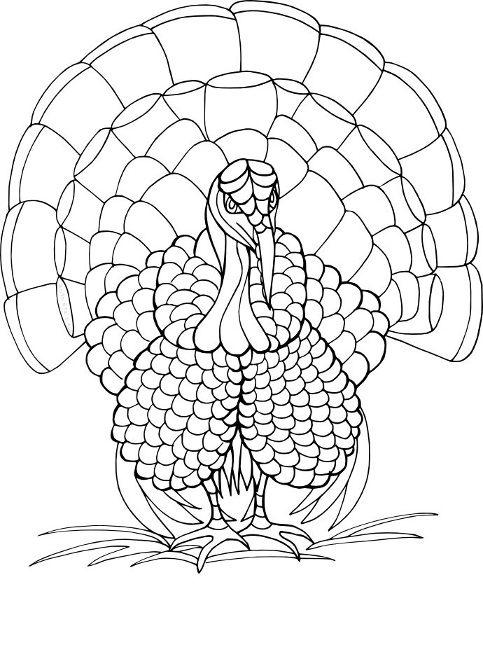 wild turkey coloring pages az coloring pages Realistic Turkey Coloring Pages  Wild Turkey Coloring Pages Printable