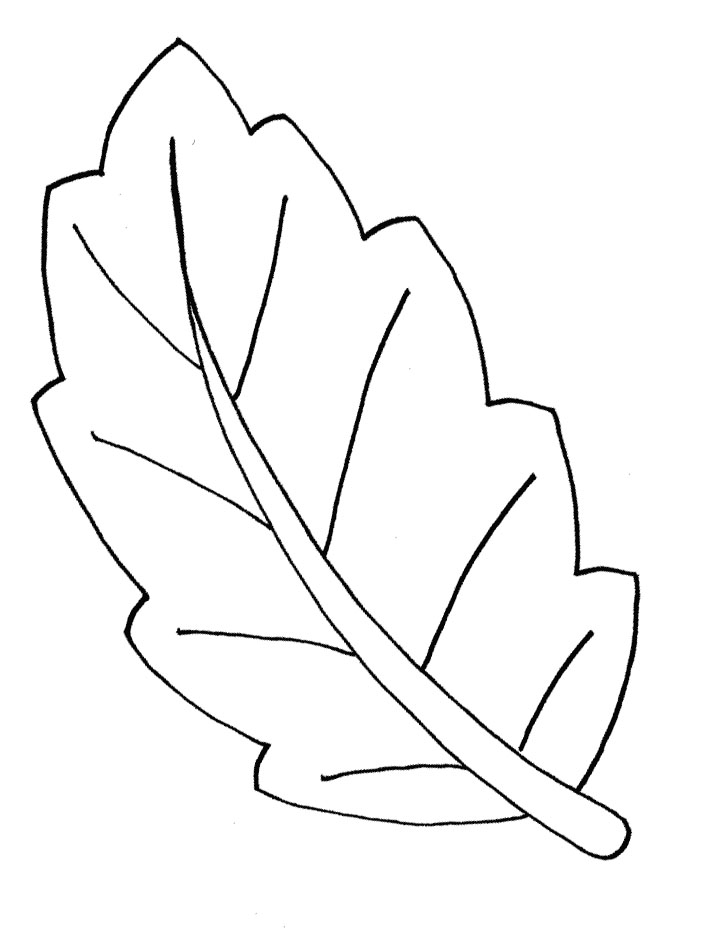 Free Coloring Pages Of Leaf Shapes Leaf Colouring Pages