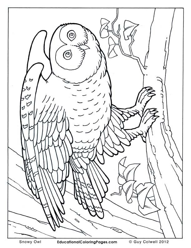 free realistic animal coloring pages - photo#26