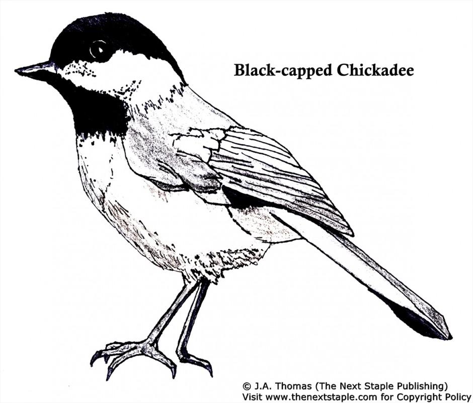 Bluebird coloring page az coloring pages for Blue bird coloring pages
