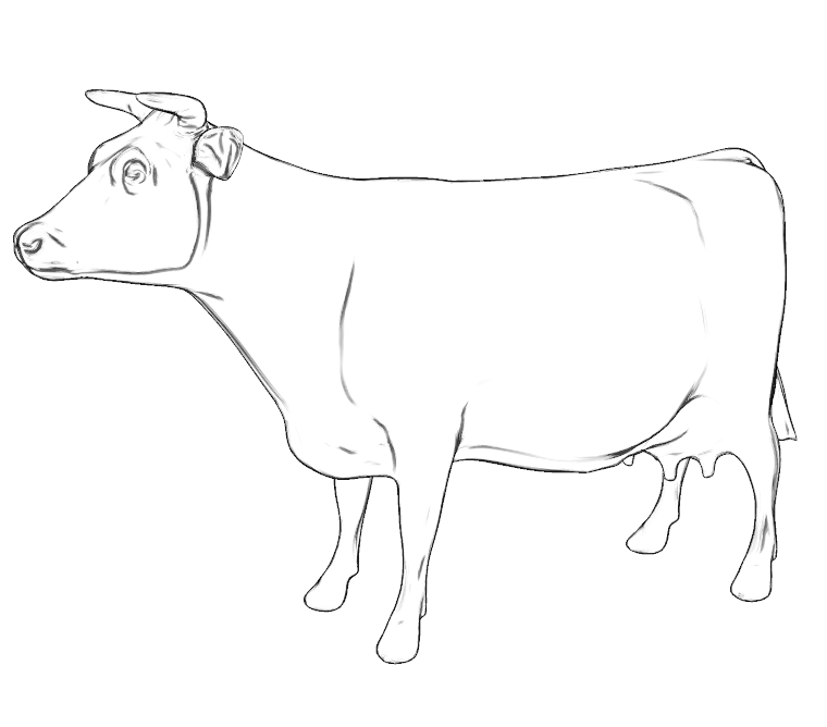 cow side view coloring pages - photo#9