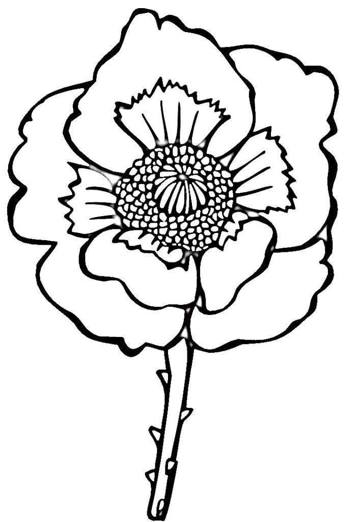 Easy Flower Poppy Coloring Page - DeColoring - AZ Coloring