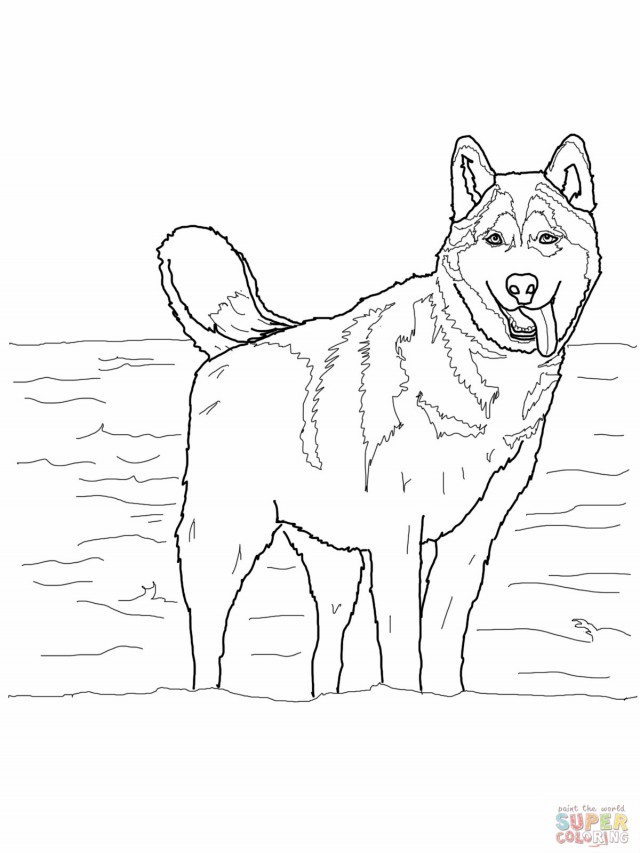 free printable husky coloring pages - husky dog coloring pages az coloring pages