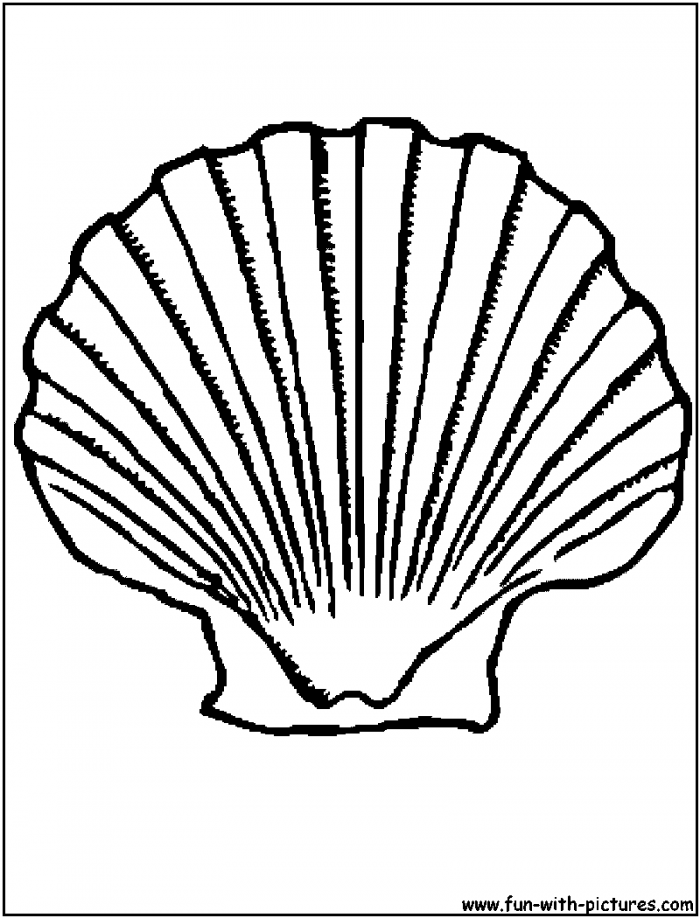 Printable seashell coloring pages coloring home for Coloring pages of seashells