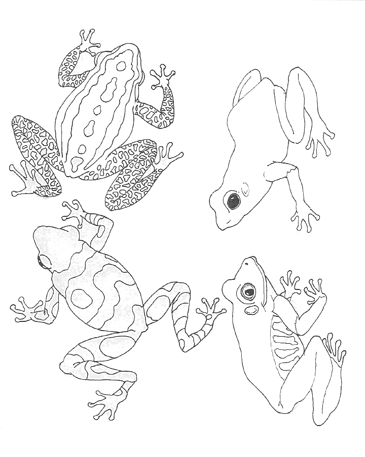 Tree Frog Coloring Pages - AZ Coloring Pages