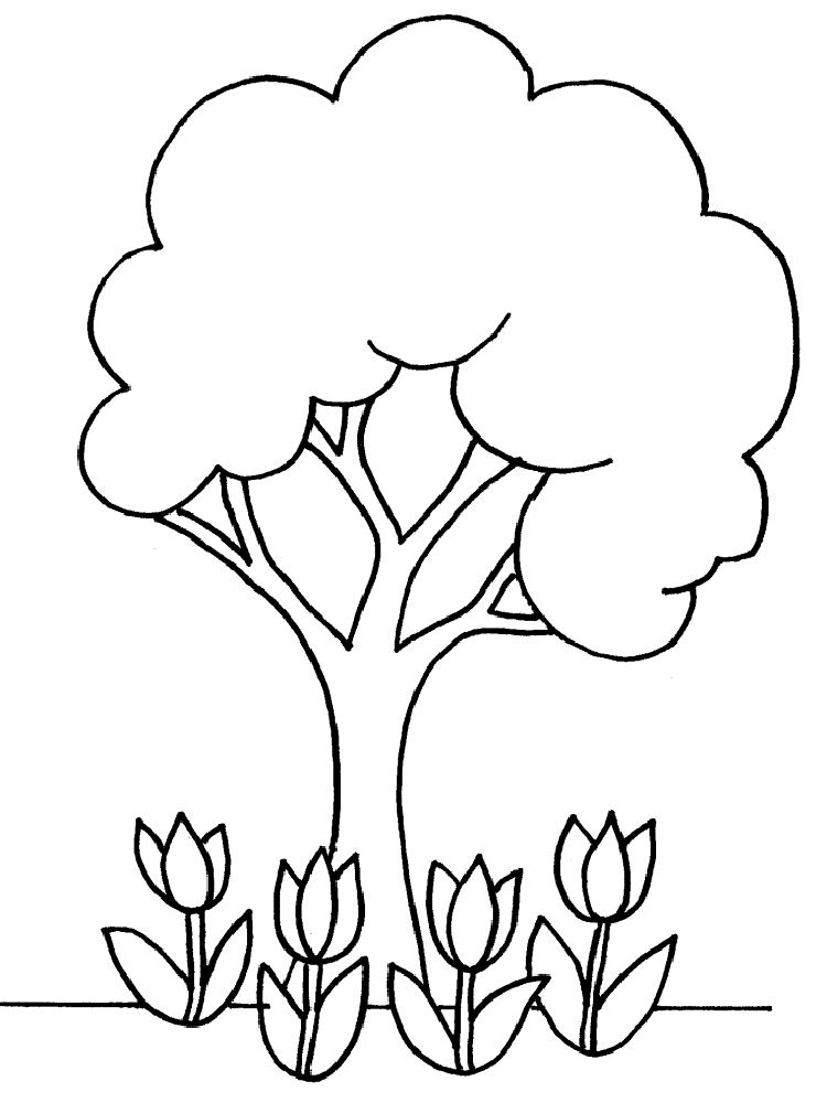 Evergreen Tree Outline AZ Coloring
