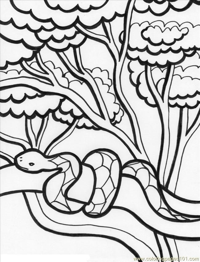 - Rainforest Coloring Page - Coloring Home
